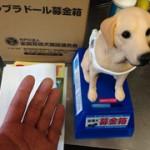 盲導犬への理解を深めて頂くために♪